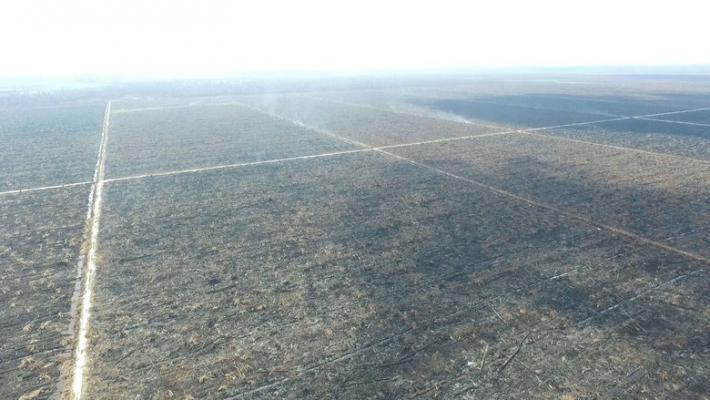 riaugreen_700-Perusahaan-di-Riau-Rambah-Hutan-secara-Ilegal