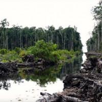 Pembukaan gambut buat kanal di konsesi perkebunan sawit di Kalimantan Timur. Kala tak ada perlindungan kuat, hutan primer dan gambut terus tereksploitasi.  Foto Aidenvironment diambil Mei 2015