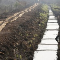 Presiden Joko Widodo meninjau langsung pembuatan kanal bersekat di Pulang Pisau, Kalimantan Tengah, 31 Oktober 2015. Jokowi mengatakan pembuatan kanal bersekat akan terus dilakukan tanpa henti untuk meminimalisir kebakaran hutan. REUTERS/Darren Whiteside